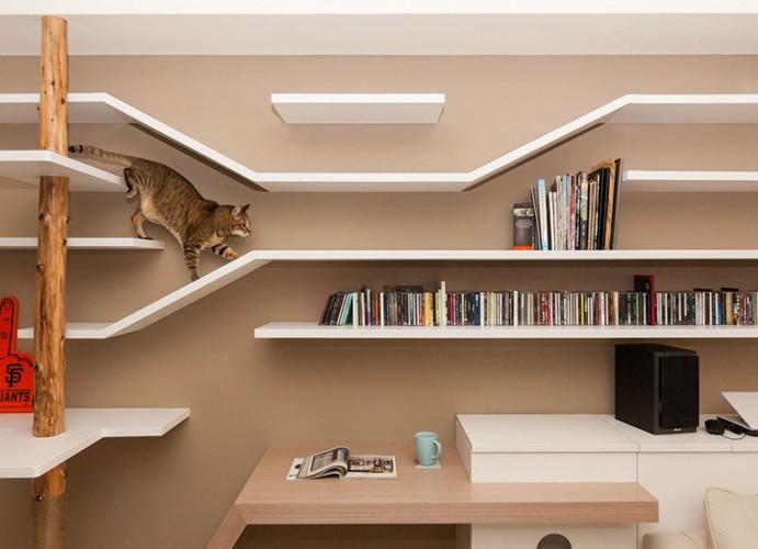 本棚を歩く猫