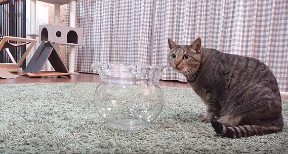 金魚鉢の前の猫