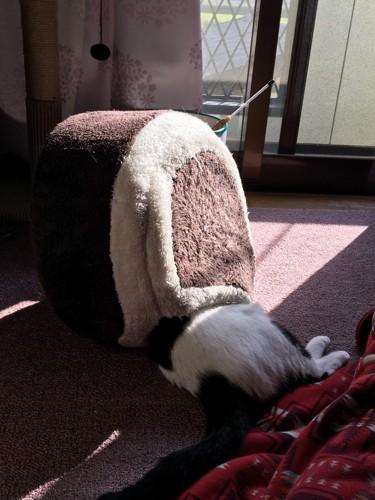 間違った猫ベッドの使い方