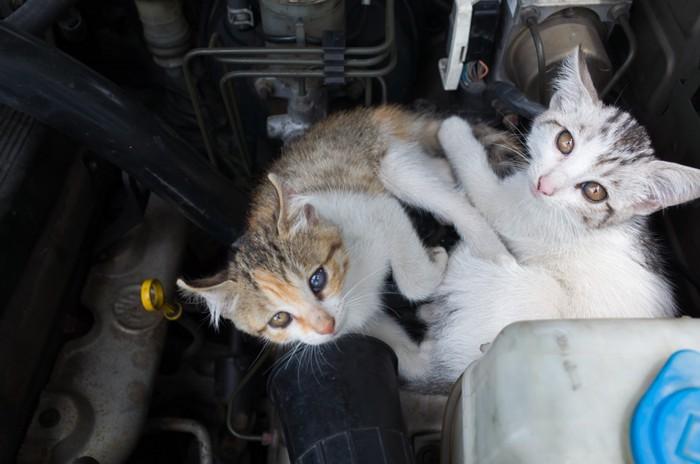 エンジンルームの子猫2匹