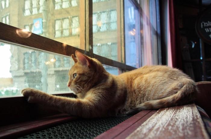 窓から出たい猫