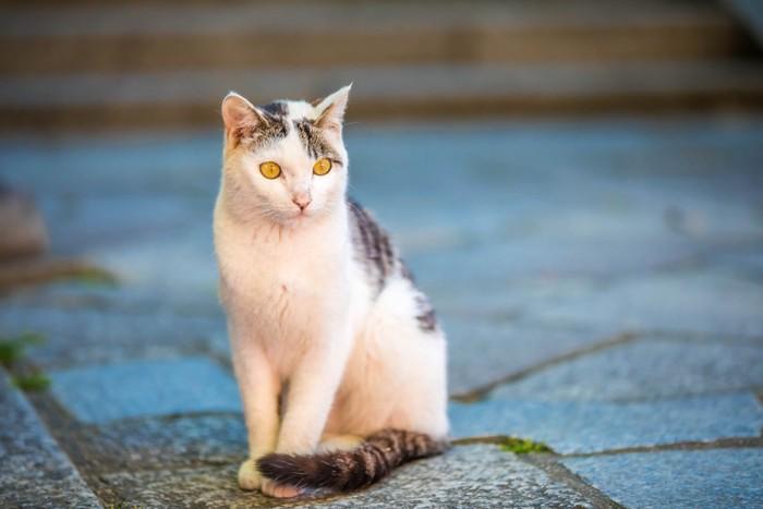 石畳に座る猫