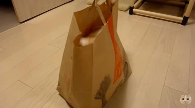 紙袋に潜る猫