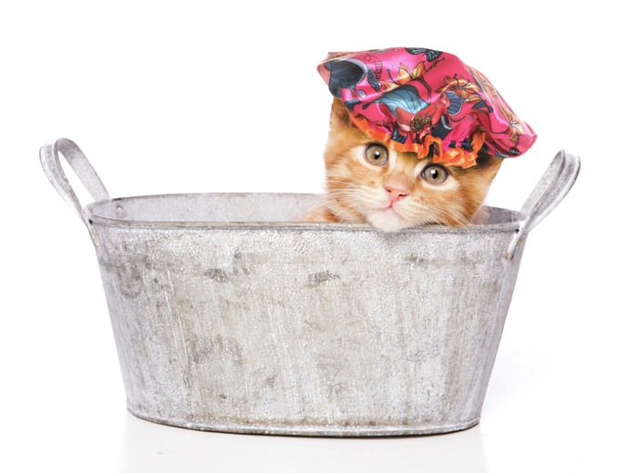 シャンプーハットをする子猫