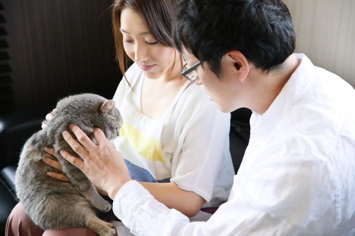 女性と男性に抱っこをされている猫