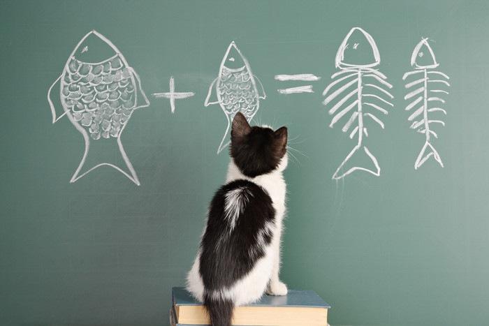 黒板に描いた魚を見る猫