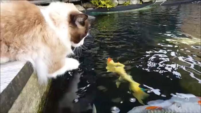 池を見る猫