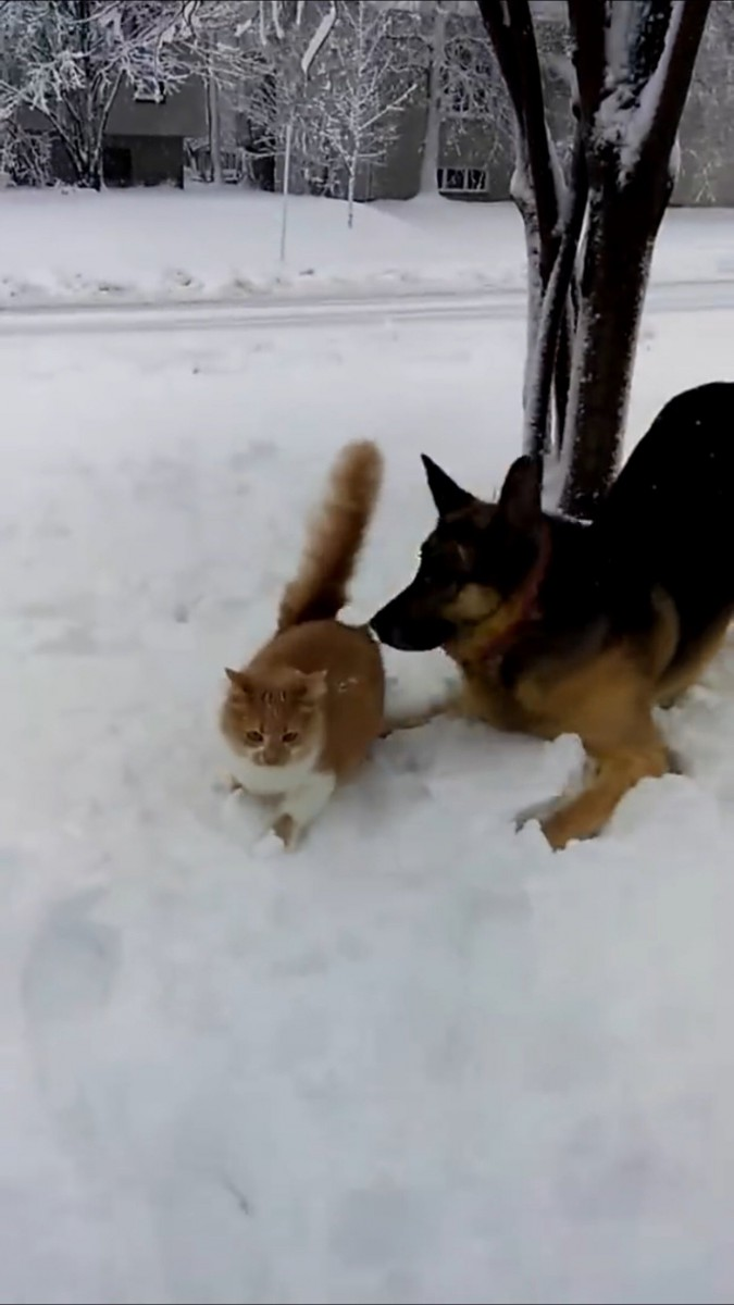 雪を喜ぶ犬と猫