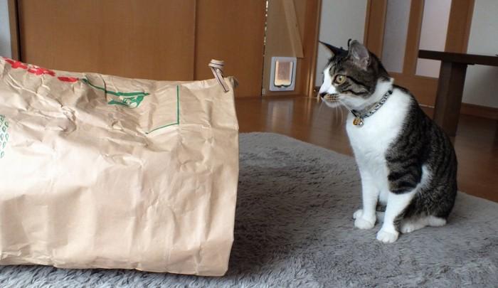 お米の袋を覗き込む猫