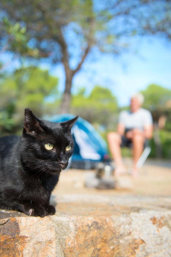 キャンプ場に居る猫