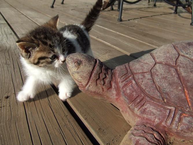 キスをする子猫と亀