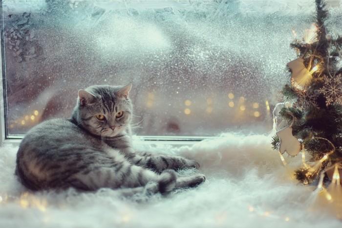 雪の日の窓際にいる猫