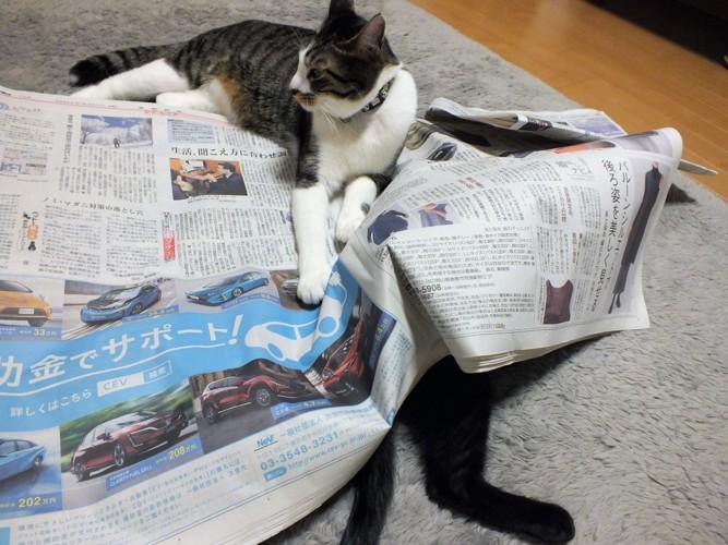 新聞紙ぐちゃぐちゃ