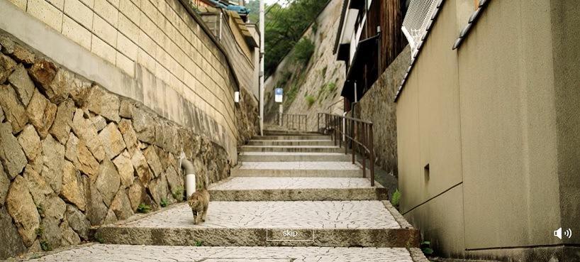 階段を下りてくる猫