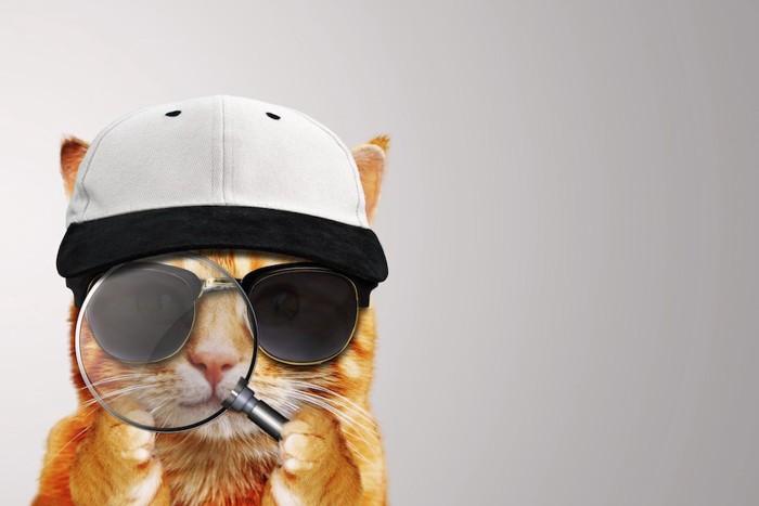 探偵のような格好をした猫