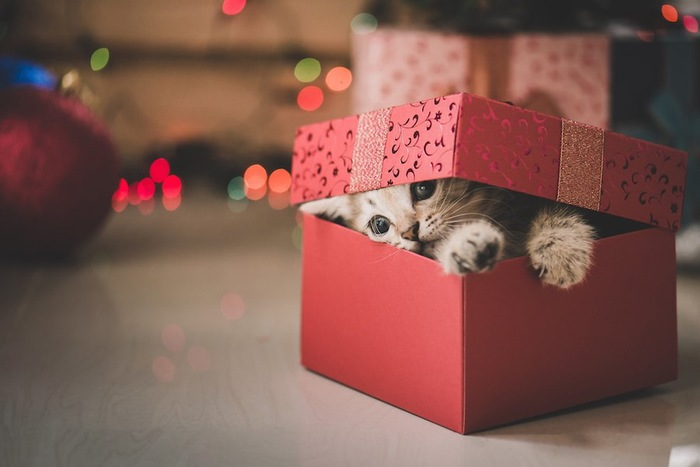 プレゼントボックスから顔を出す子猫