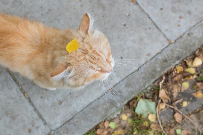 葉っぱを頭に乗せた猫