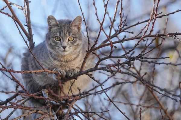 木の上に乗る猫