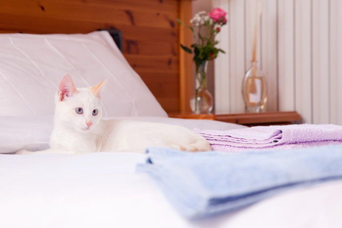 白猫とベッドの写真