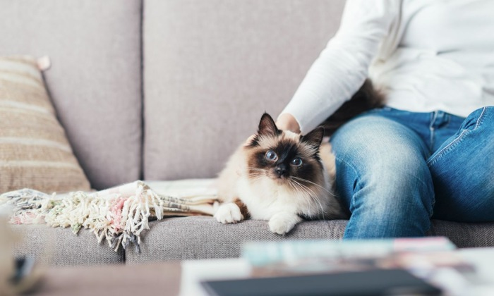 ソファーの猫