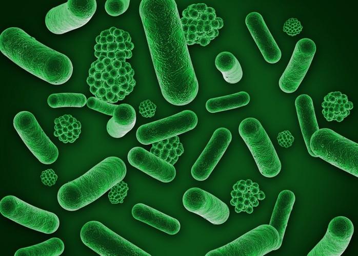 細菌イメージ