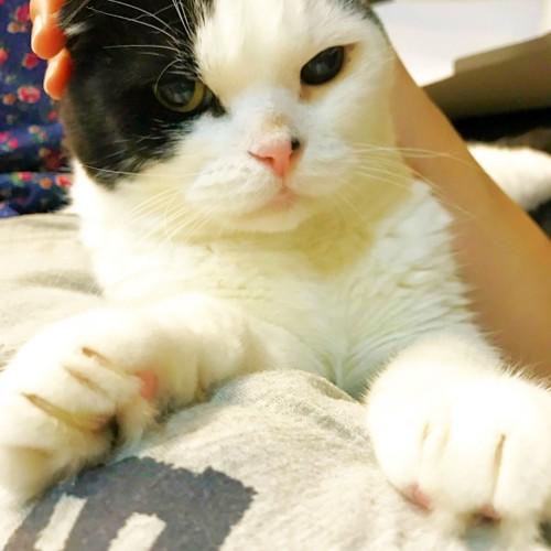 白黒猫の頭を触っている写真