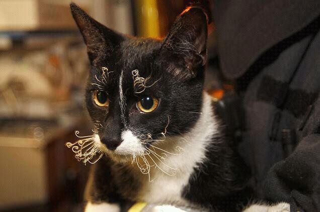 ひげが焦げた猫