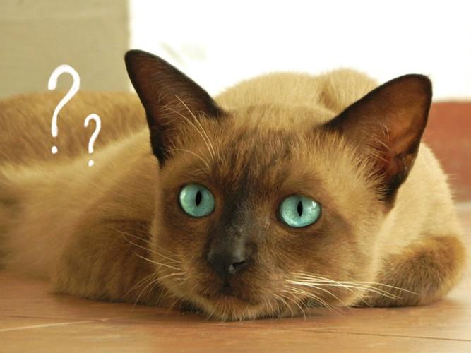 ハテナマークとグリーンの瞳の猫