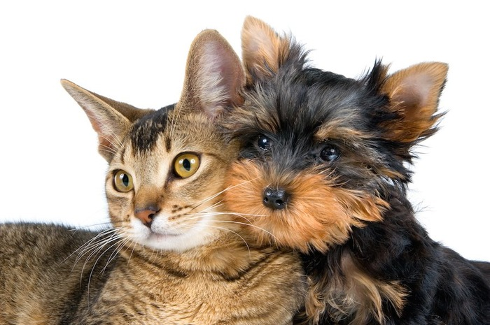 顔をくっつけあう犬と猫