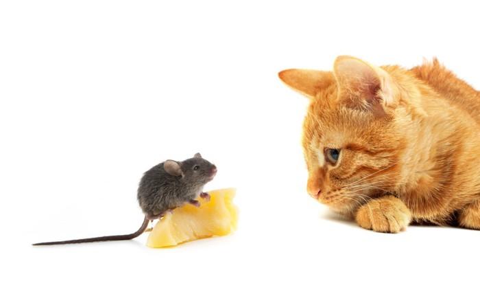 猫とネズミとチーズ