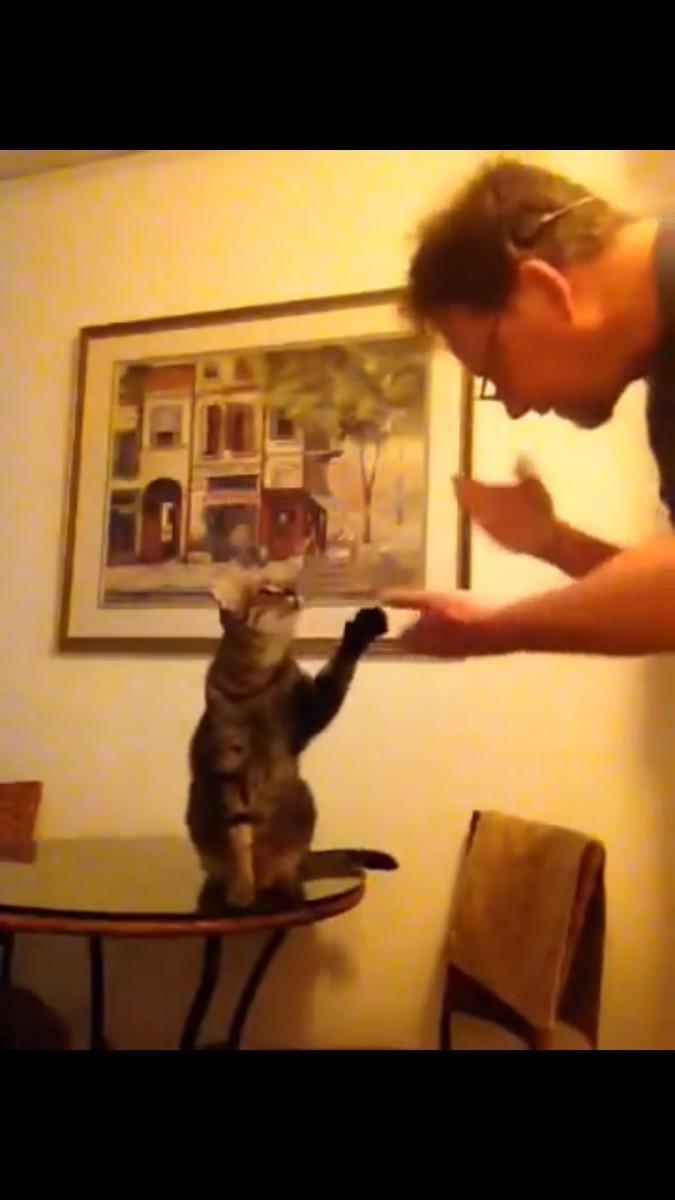 手をあげて応える猫