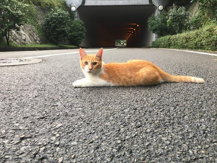 猫とトンネル
