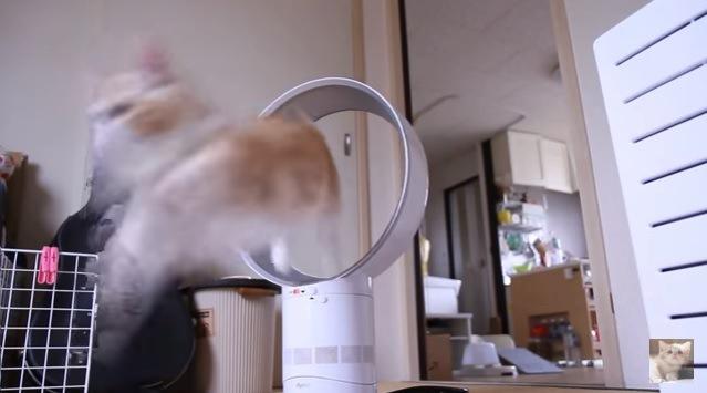 輪っかをくぐり抜けた猫(斜めから撮影)