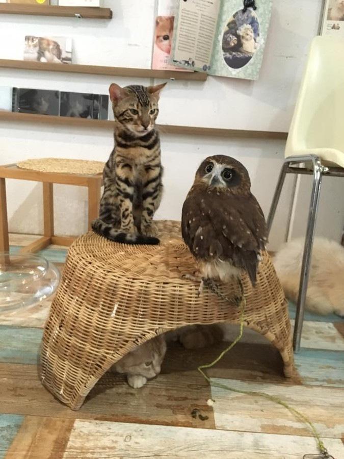 ネクタイをする猫とフクロウ
