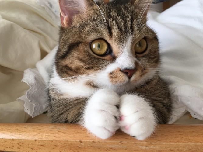 前足で何かを掴む猫