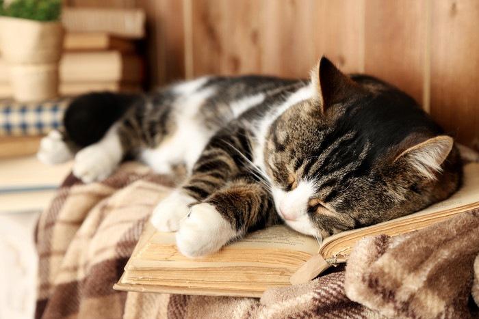 本の上で眠る猫