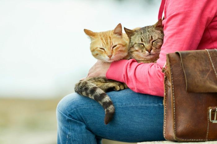 23 ひざに2匹の猫を乗せる女性