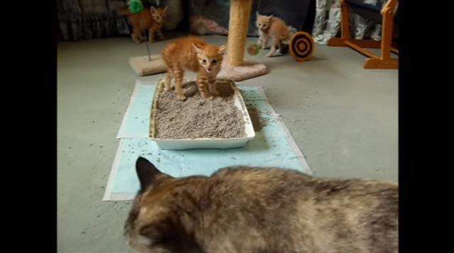 威嚇する3匹の子猫(手前に大猫)