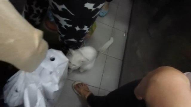 乗客の足元で座る猫