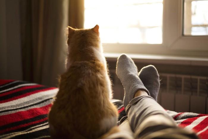 眠る飼い主の足元で座る猫
