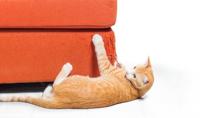 横になってソファで爪とぎしている猫