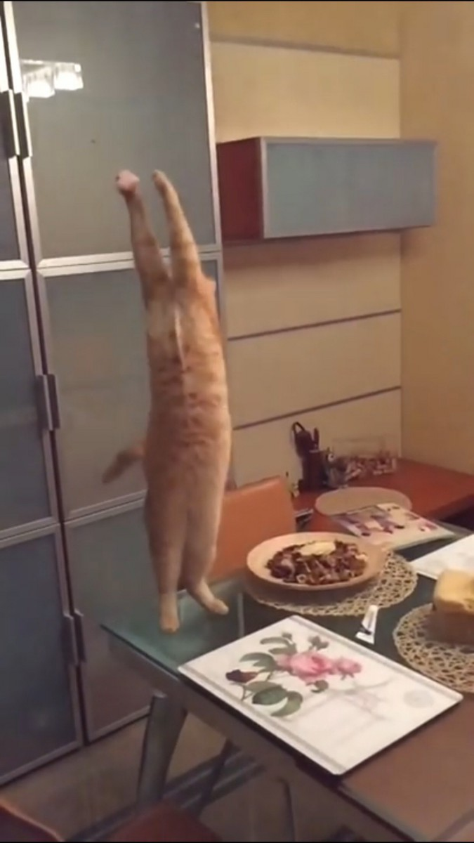 ハエを掴もうとする猫