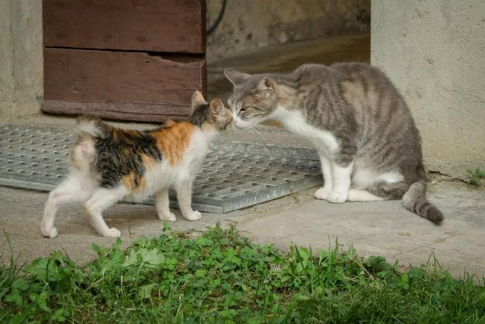 鼻をくっつけている猫