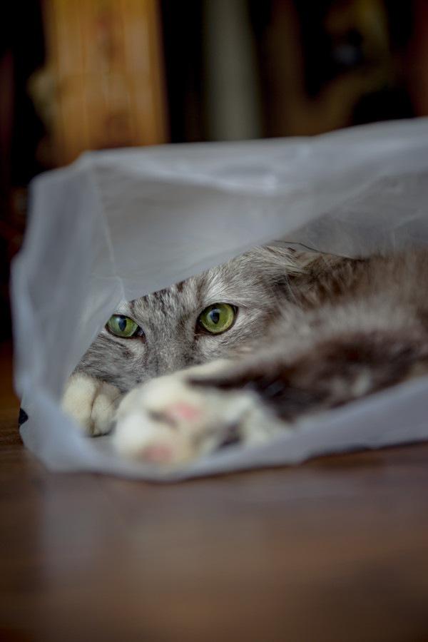 足を投げ出している猫
