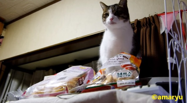 お座りをして正面を向く猫