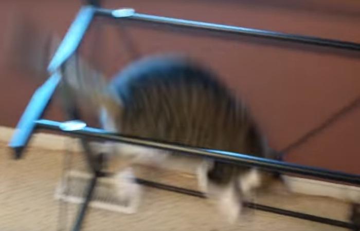 机に向かってジャンプする猫