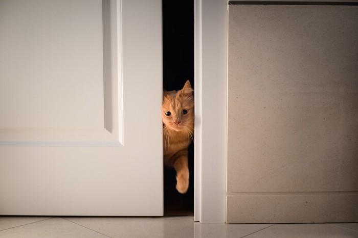 ドアに挟まれている猫