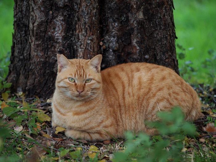 木の側で座る猫
