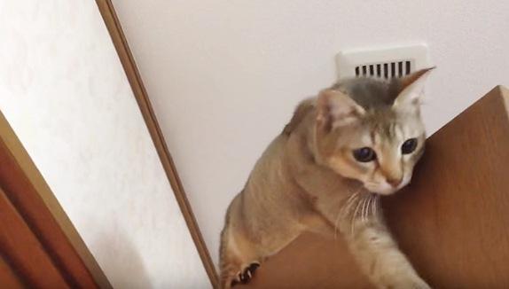 扉から下へ足を伸ばす猫