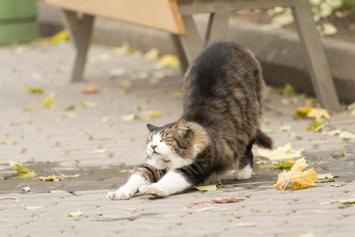 道路でストレッチする猫